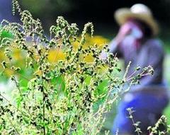Аллергены, провоцирующие возникновение сенной лихорадки