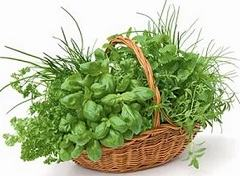 Как назначаются препараты травы Термопсиса