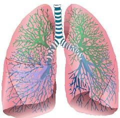 Симптоматика крупозной пневмонии